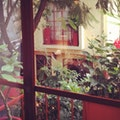 The Red Tree House Mexico City  Mexico