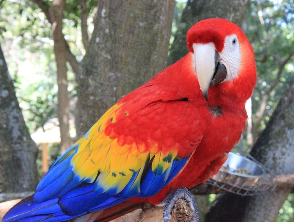 Discover a Private Island Filled with Exotic Animals Sandy Bay  Honduras