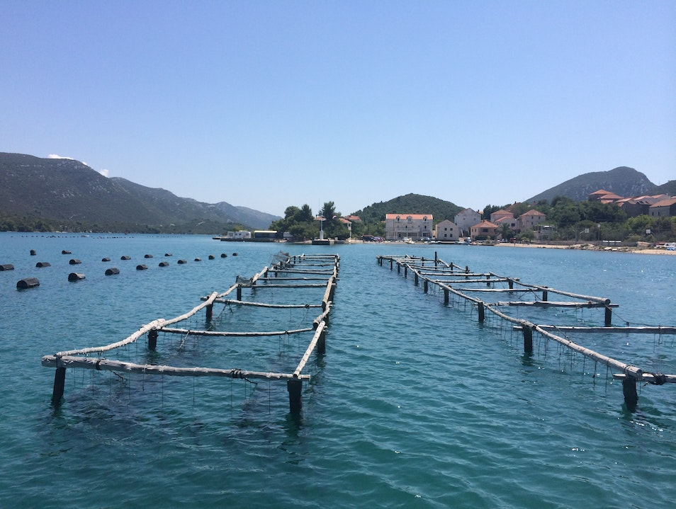 Oyster Farms in Mali Ston