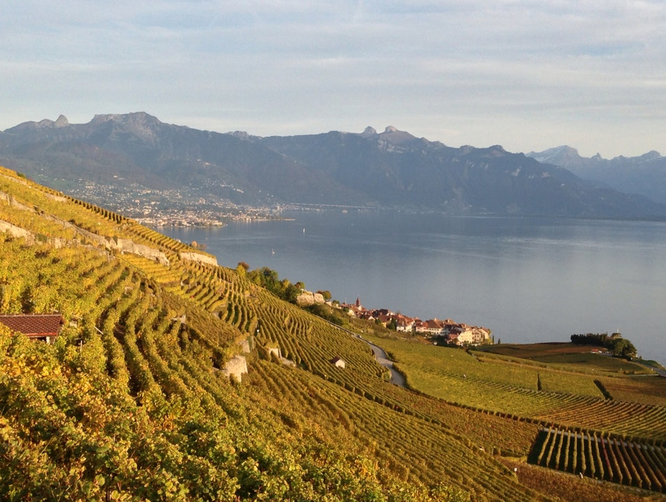St Saphorin vineyards Saint Saphorin  Switzerland
