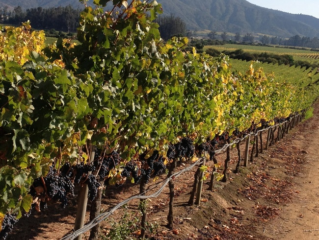 Autumn in Maipo Wine Country