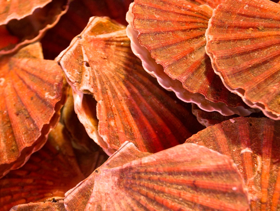 Scallops to Admire, Not to Eat