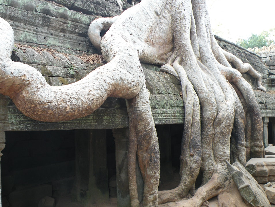 Ghost-liked tree in Ta Prohm Siem Reap  Cambodia