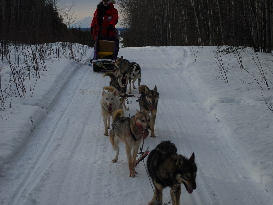 Dogsledding, Kenai National Forest Sterling Alaska United States
