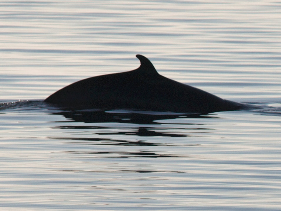 Whale-Watching Grandes Bergeronnes  Canada
