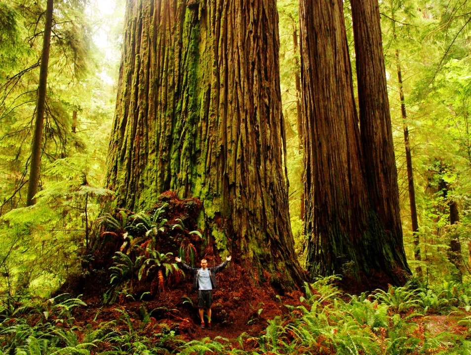 Discover a hidden forest Crescent City California United States