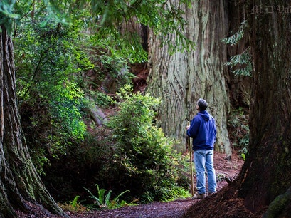 Prairie Creek Redwoods State Park Orick California United States