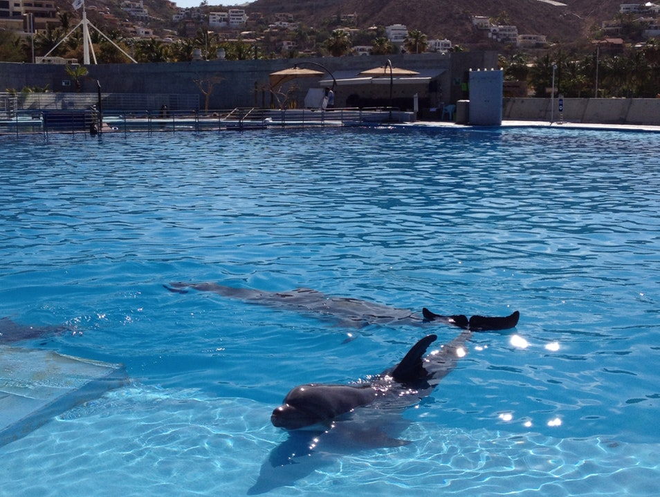 Swim With The Dolphins In Cabo