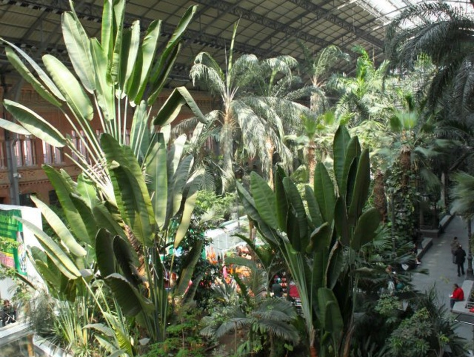 The Madrid Train Station is a Jungle Madrid  Spain