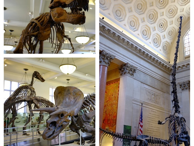 Feeding My Inner Child at the American Museum of Natural History