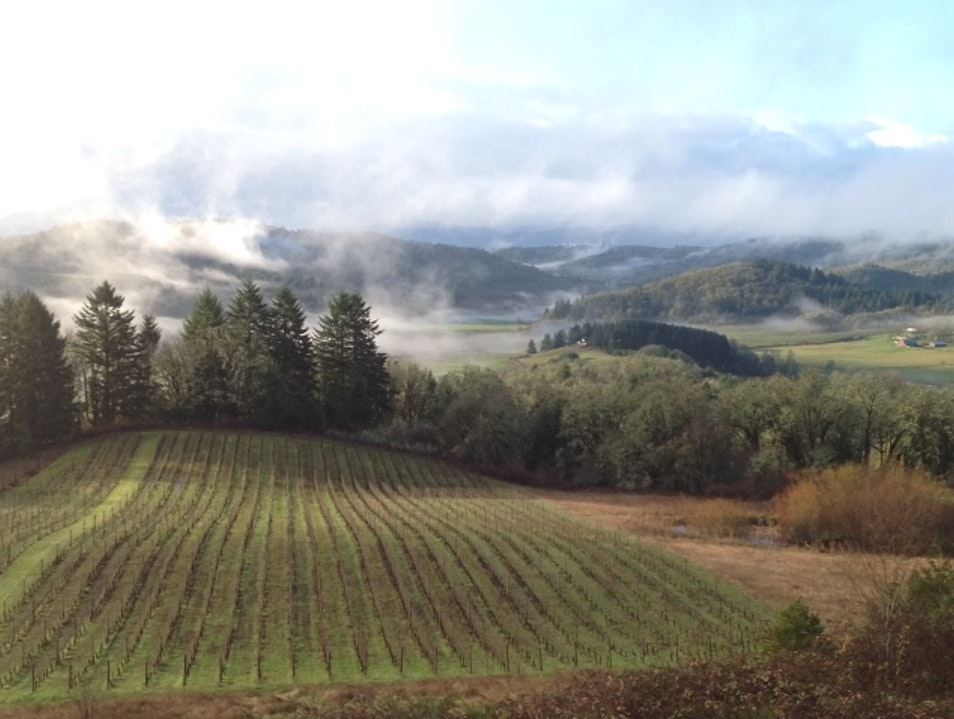 Pinot Noir Dreams at Youngberg Hill Inn and Winery Mc Minnville Oregon United States