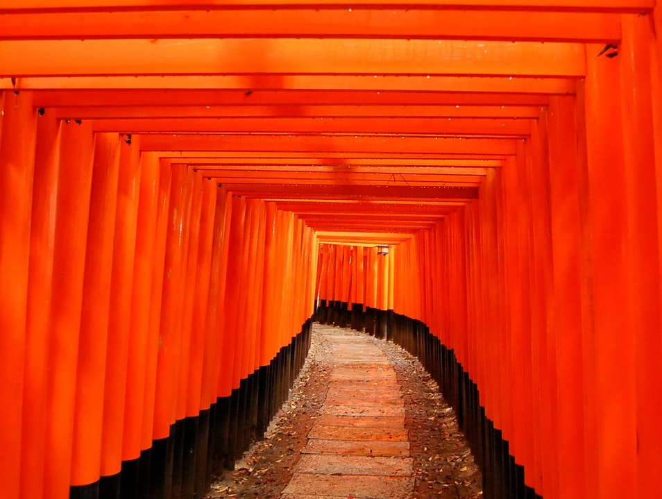 Climbing through gates of orange in the rain Kyoto  Japan