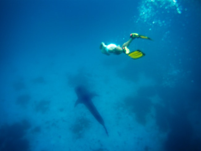 Swim With Whale Sharks in the Southern Philippines