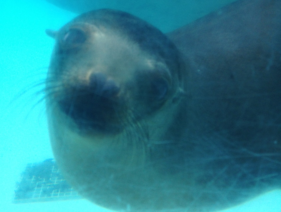 Sea Lions at the Zoo Pittsburgh Pennsylvania United States