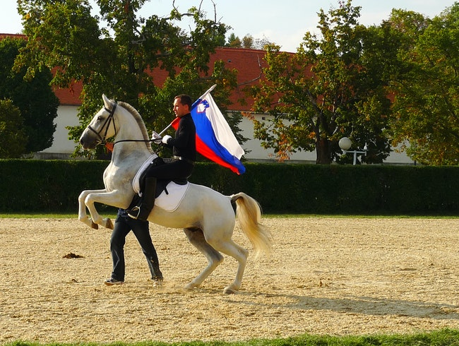 Lipizzaner at Lipica