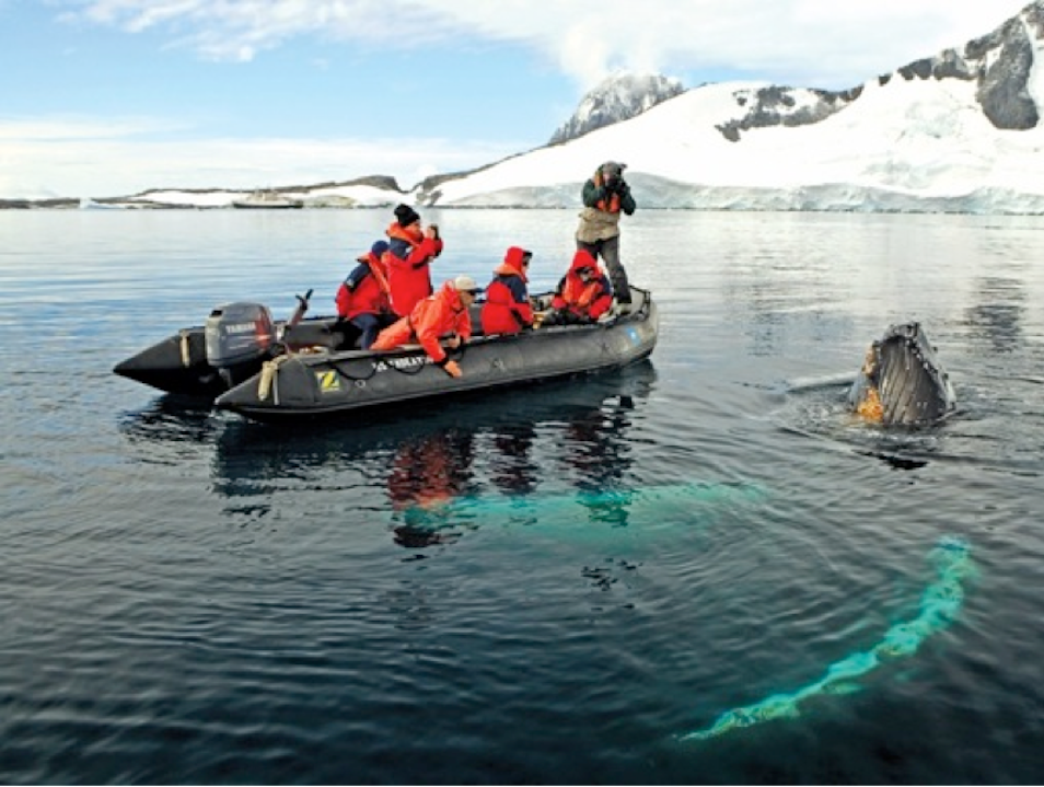 Antarctica's Curious Giants