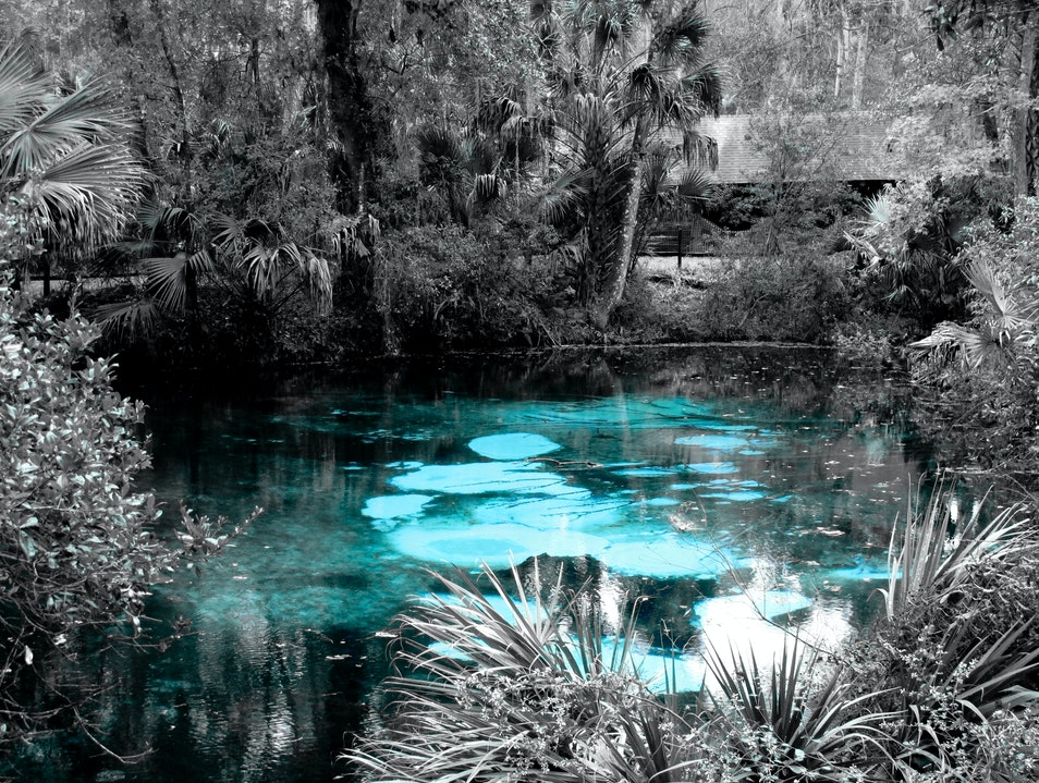 Canoeing down Juniper Springs Ocala National Forest Florida United States