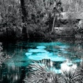 Juniper Springs Ocala National Forest Florida United States