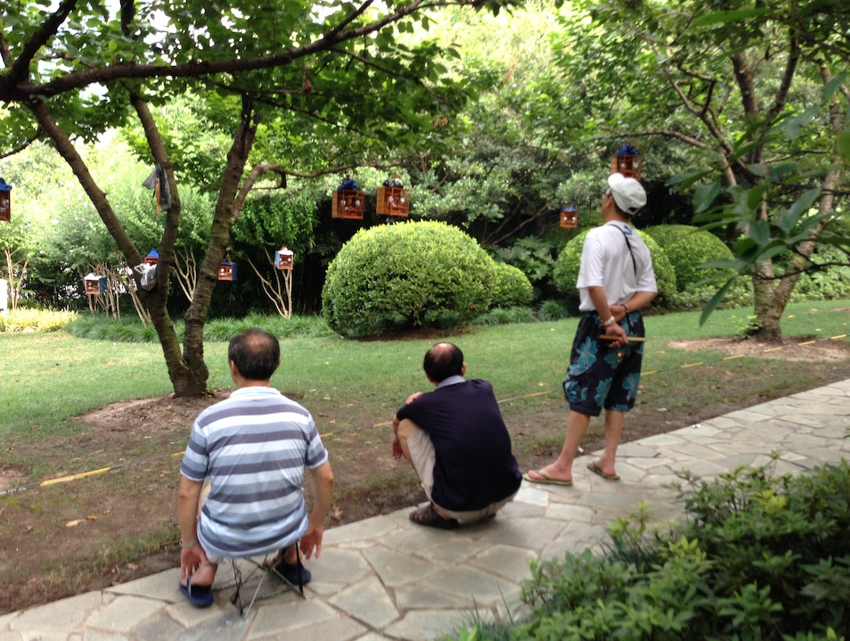 Men Watching Their Pet Birds Learn New Songs Shanghai  China