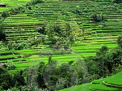 Sideman Valley Hike Sidemen  Indonesia