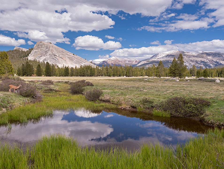 Tuolumne Meadows Wawona California United States