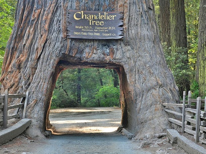 Drive-Thru Tree Park LEGGETT California United States