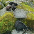 Anan Creek Wildlife Viewing Site Wrangell Alaska United States