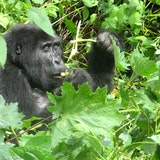 Bwindi Forest National Park Uganda