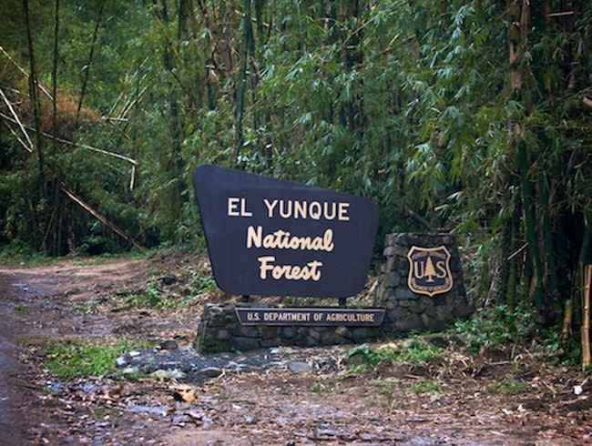 Weather the Rain for El Yunque National Rainforest