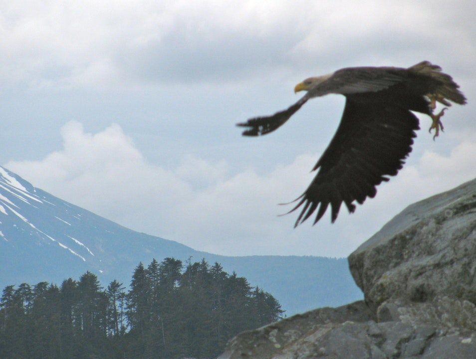 Soaring with the Eagles  Sitka Alaska United States