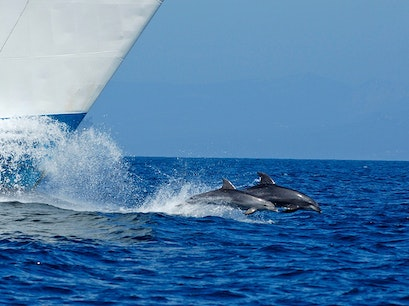 Dolphins and Whales in the Strait of Gibraltar Tarifa  Spain
