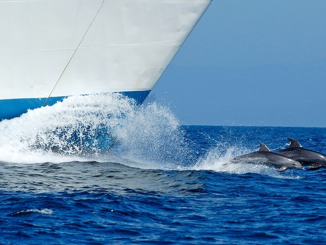 Dolphins and Whales in the Strait of Gibraltar