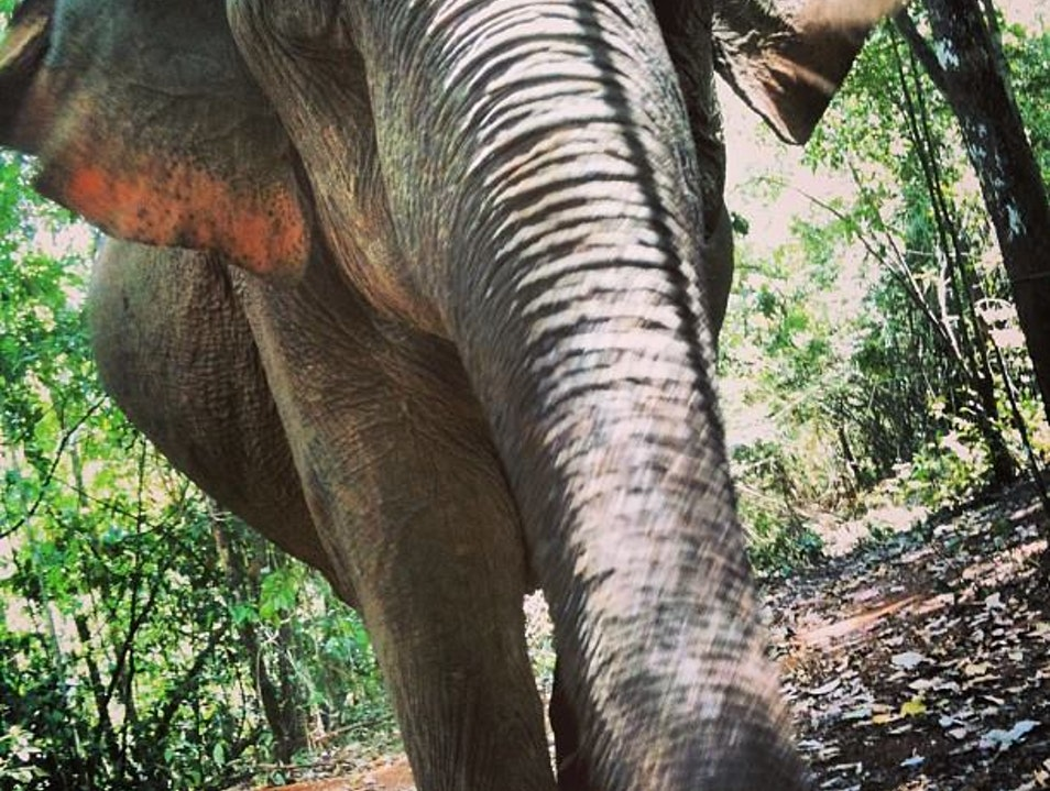 Trekking with Elephants in Cambodia Krong Saen Monourom  Cambodia