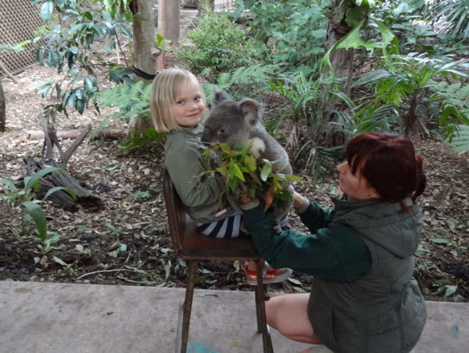 Lone Pine Koala Sanctuary - A Safe Haven for Tourists Fig Tree Pocket  Australia