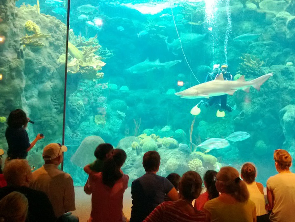 Sharks, Seahorses, and Somersaulting Otters Tampa Florida United States