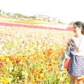 Flower Fields at Carlsbad Ranch Carlsbad California United States