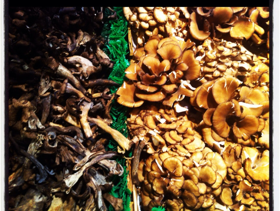 Delicious Funghi Seattle Washington United States
