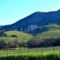 Groot Constantia Cape Town  South Africa