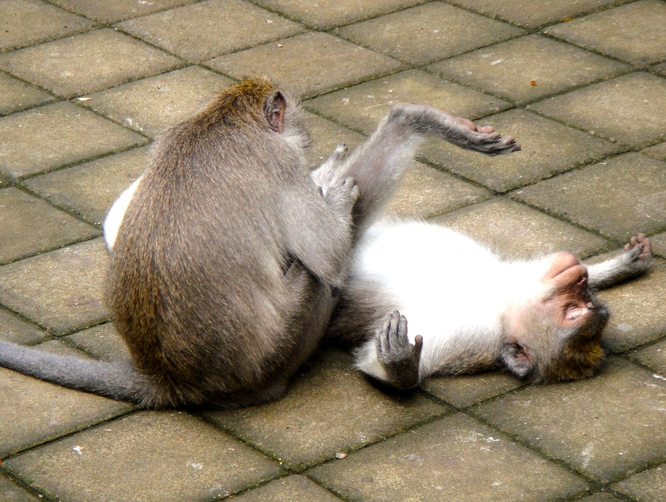 We are more alike than different! Ubud  Indonesia