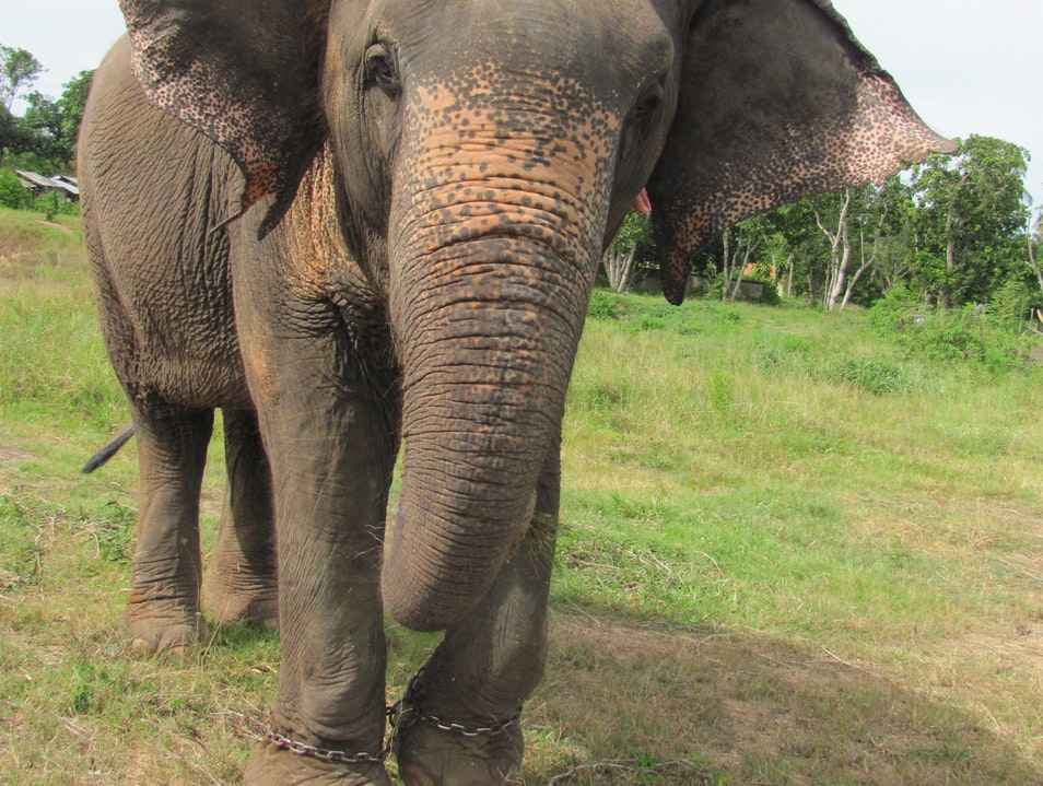 See the World Sitting Atop an Elephant