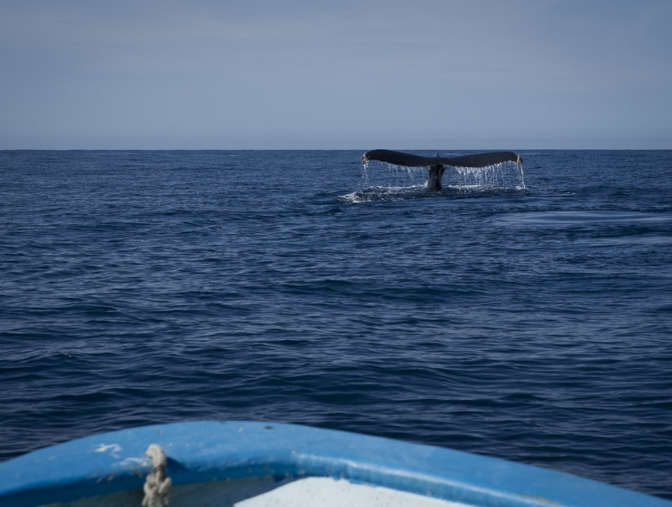 Whale Watching in Baja Todos Santos  Mexico