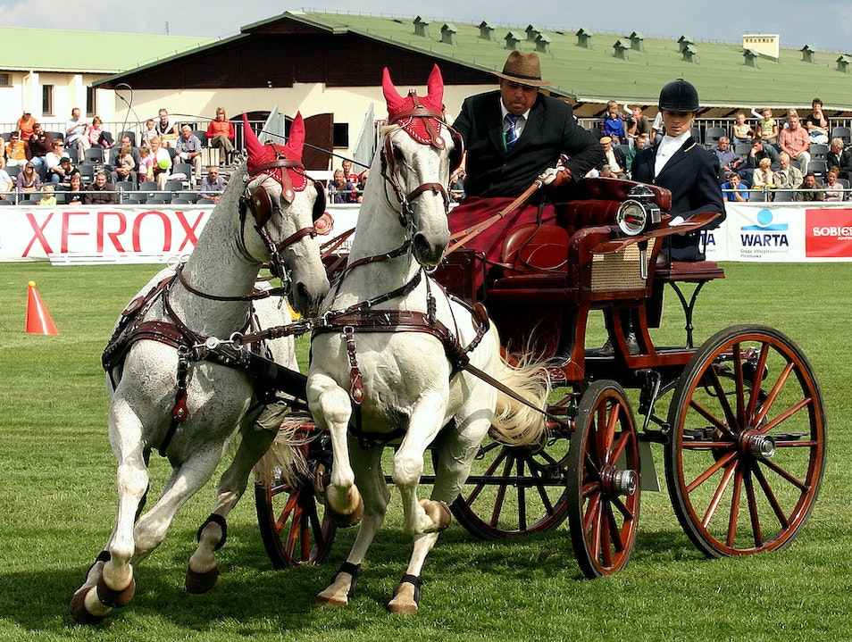 Carriage driving Warka  Poland