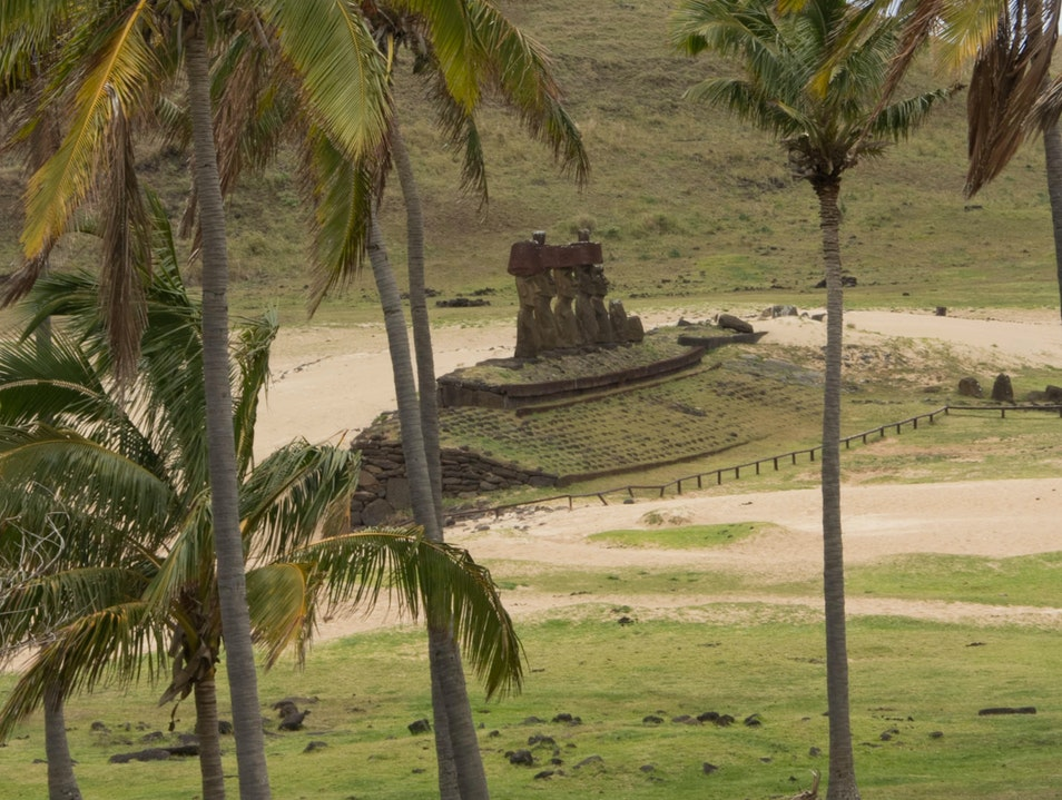 Easter Island and the Wild Moai