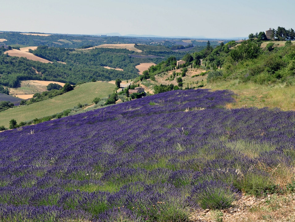 Lavender Route    France