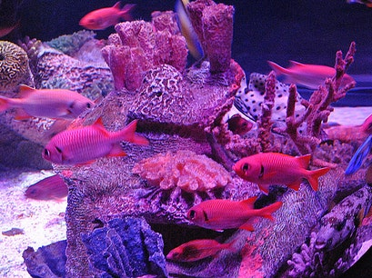 Sea Life Kansas City Kansas City Missouri United States
