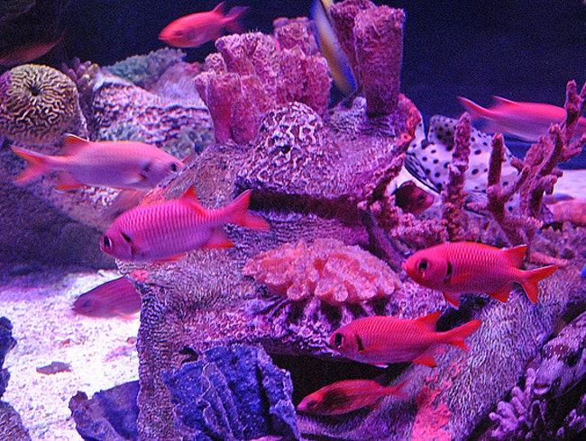 Immerse Yourself in a Marine World at Sea Life Aquarium