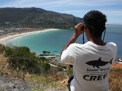 Shark Spotter Cape Town  South Africa