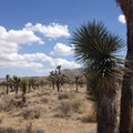 Joshua Tree National Park Visitors Center Joshua Tree California United States
