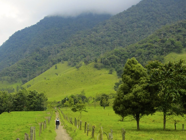 Hiking In The Coffee Triangle Of Colombia