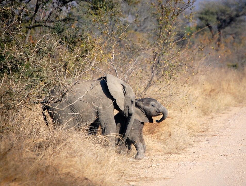 Brotherly Love on the Road.  Kruger Park  South Africa